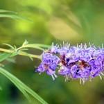 biljke-za-zene