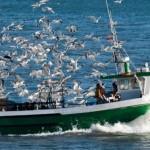 ribarski-brod-f