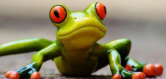 Što radi i kakva je žabica Gatalinka