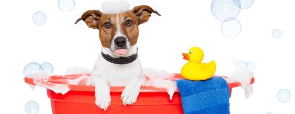 Pranje psa: veselje u kupanju kućnog ljubimca
