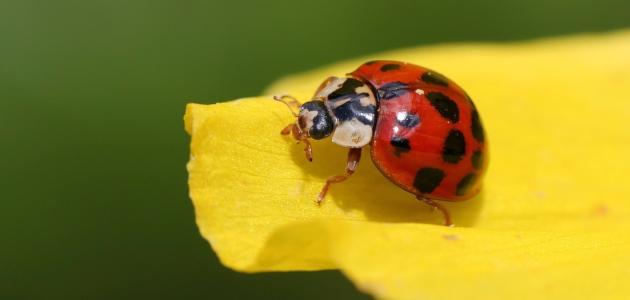 Uloga i simbolika poznatih kukaca