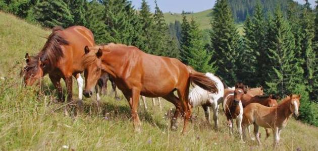 Konji te prekrasne plemenite životinje