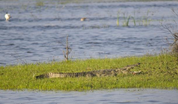 krokodil-1