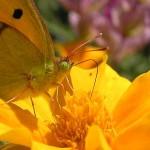 leptiri-u-vrtu
