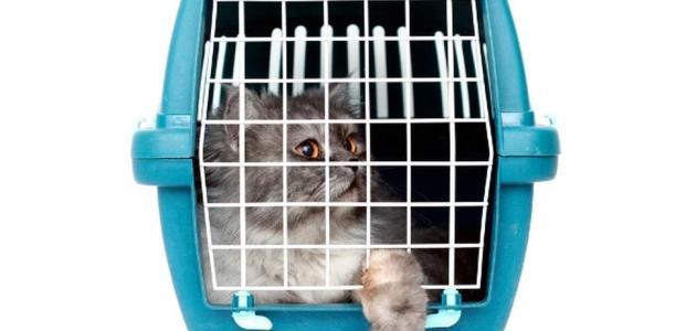 Mačke na putovanju