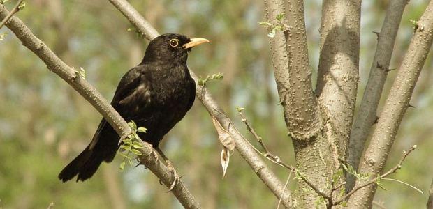 Ptice parka Maksimira