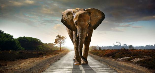 Slonovi ta velika bića koje volimo