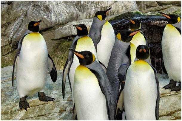 zoo-berlin-pinguin