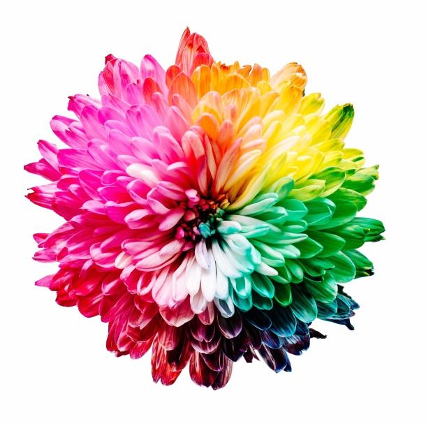 boje osnovne boje