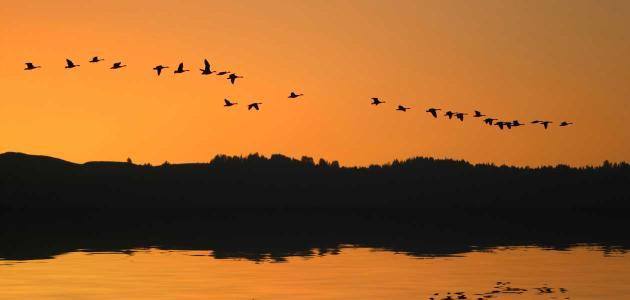 Svjetski dan ptica selica