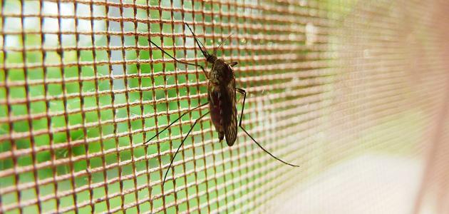 U obrani od komaraca i ostalih insekata