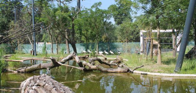Zagrebački Zoo: Predstavljanje volijere