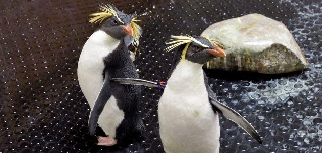Pingvini Rocky i Howie novi dom našli u Beču