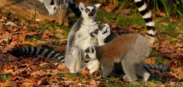 Zoološki vrt pridružuje se Samoborskom fašniku