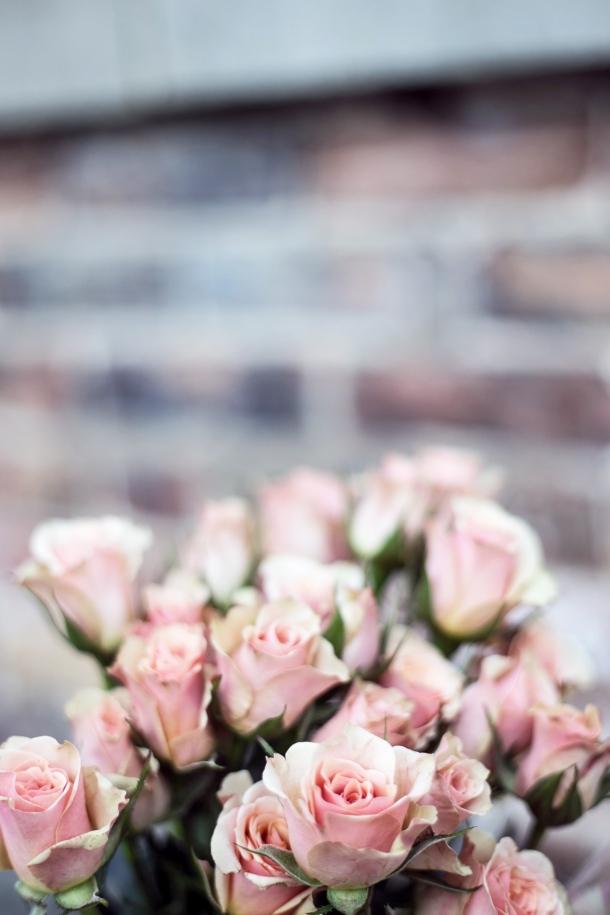 valentinovo ruze cvijet ljubavi