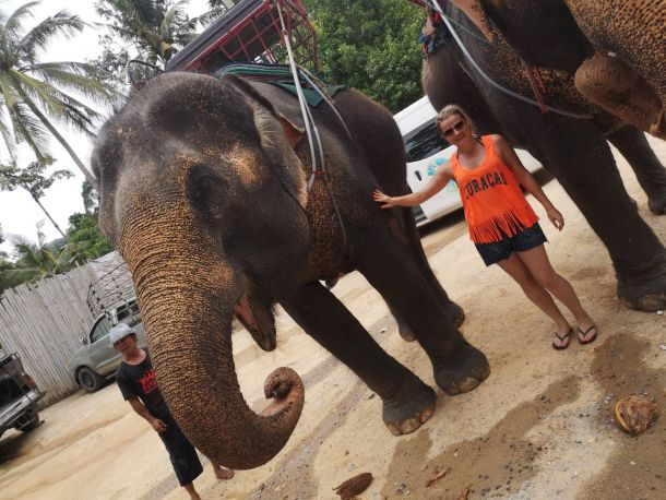 marina jaksic slon slonovi