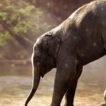 slon djeca zivotinje sisavac
