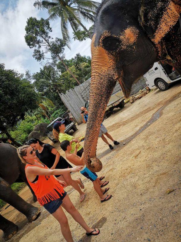 slonovi slon