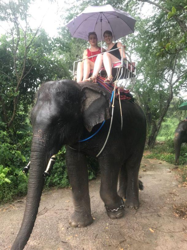 slonvi sisavci slon tajland