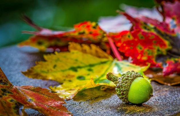 5 zabavnih jesenskih projekata s lišćem