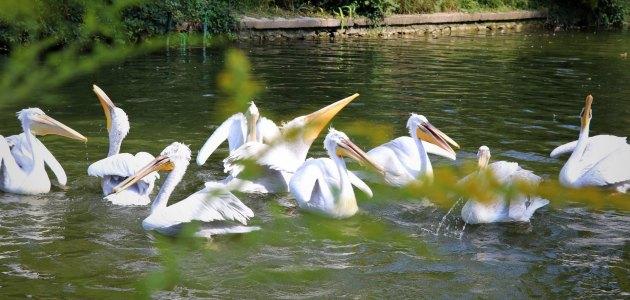 Vikend posvećen čudesnom svijetu ptica