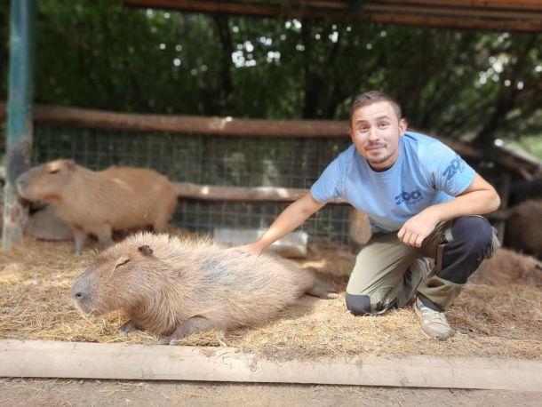 zoo-timaritelj-antonio-feliks-kapibare
