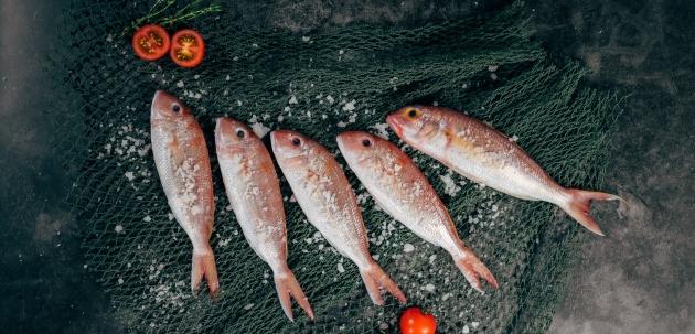Uvođenje ribe u dohranu uz nekoliko recepata