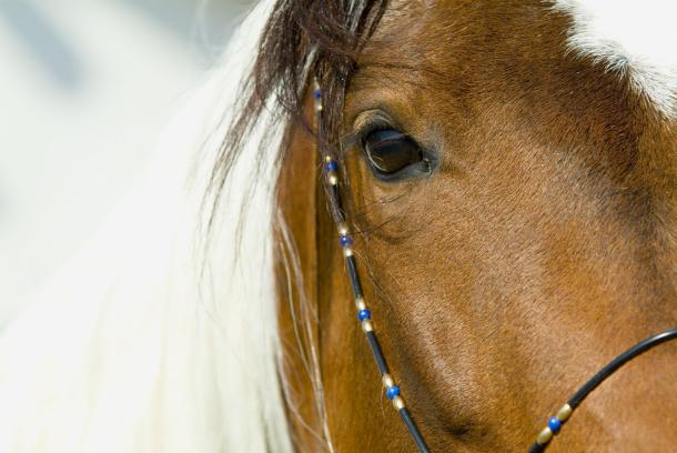 konj-3