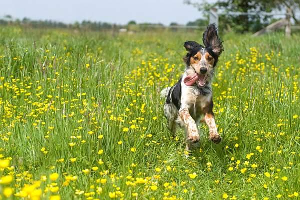 pas u cvijecu