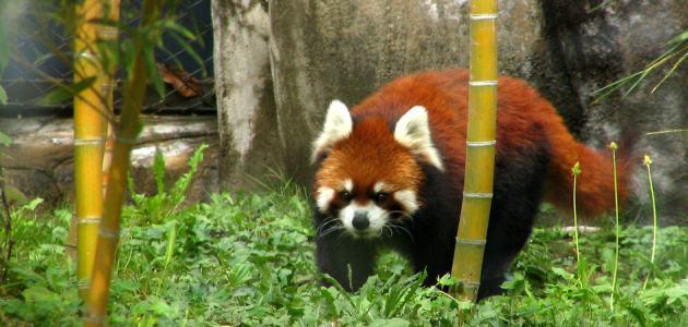 7 naj zooloških vrtova na svijetu