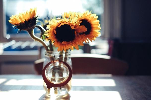 cvijeće suncokret