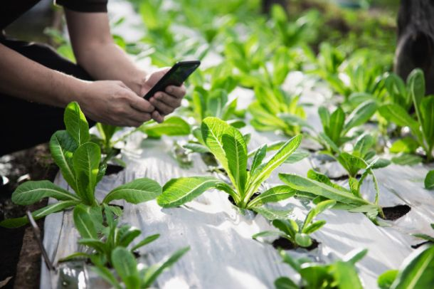 fotografiranje biljaka