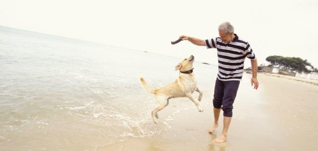 7 savjeta za vlasnike pasa u starijoj dobi
