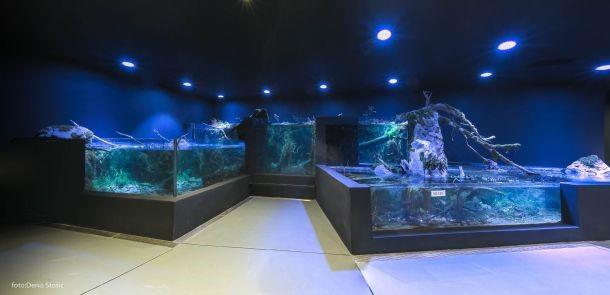akvarij-2