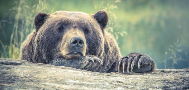 Međunarodni dan zaštite životinja u zoološkom