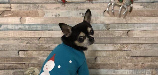 Double Trouble online butik za psiće