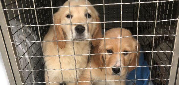Udomite psa za maženje na trosjedu ili za šetnju u prirodi: Dumovac vas čeka