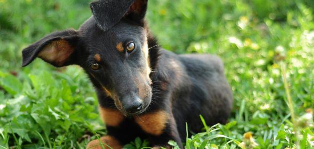 Slikovnica: Prijateljstvo ljudi i pasa na zagrebačkoj špici