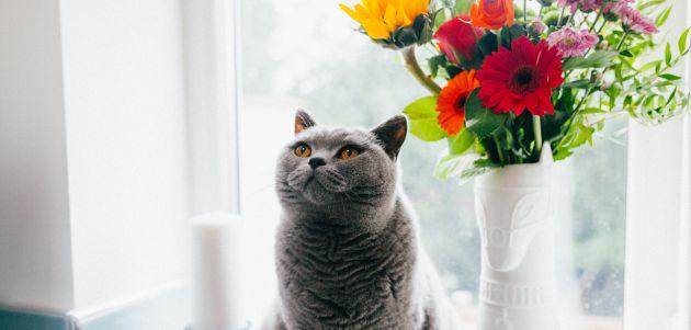 Da li je mačka dobar izbor za kućnog ljubimca?
