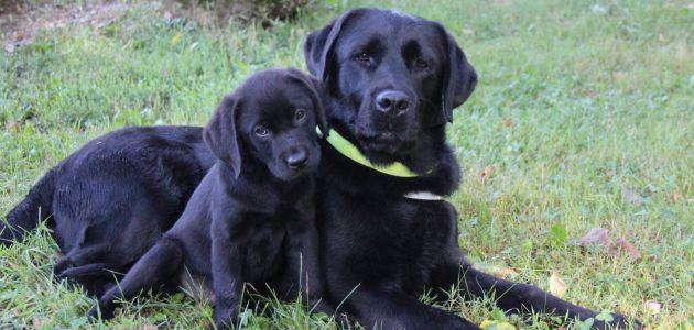 O psima vodičima i pomagačima u Životinjskom kutku