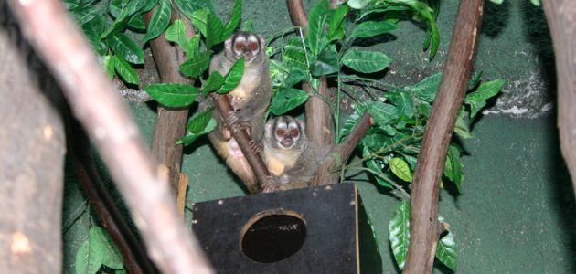 Abrakadabra Zoo – Kakve moći imaju životinje po noći