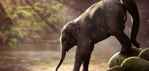 Slonovi na Tajlandu ti predivni radišni divovi