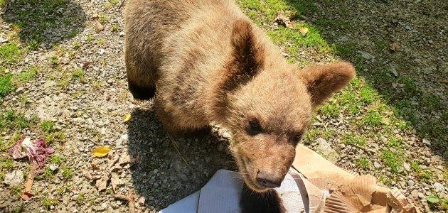 Nove zgode medvjedića Matije