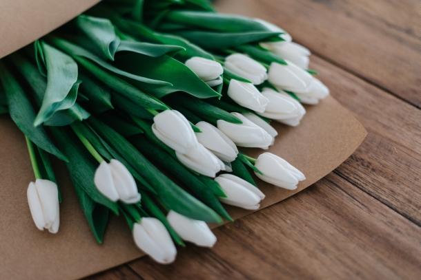 cvijeće poklon tulipan