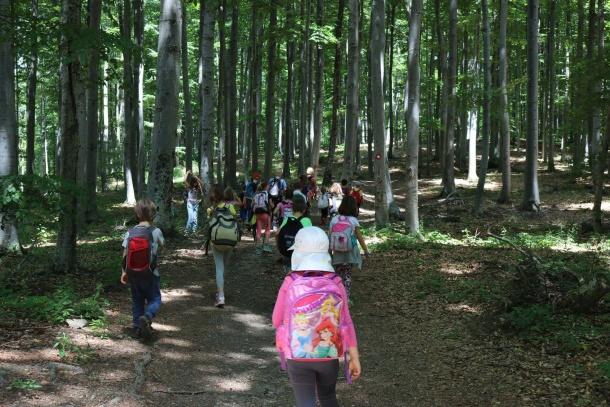 Šetnja kroz šumu-1