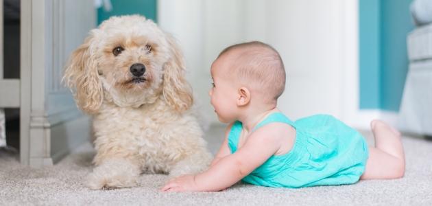 Beba i pas stvaraju predivno prijateljstvo već od prvih dana susreta