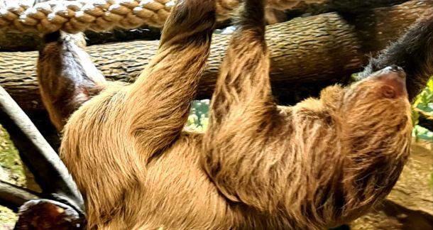 zoo-ljenivac-04