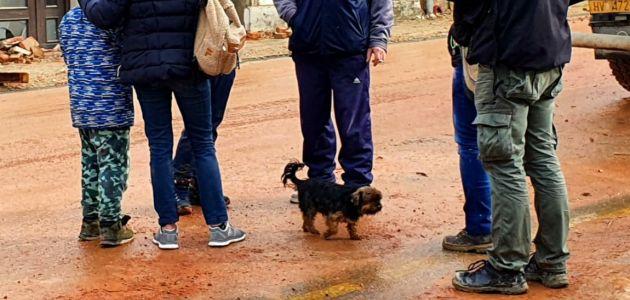 Što činiti nakon pronalaska psa u potresom pogođenom području