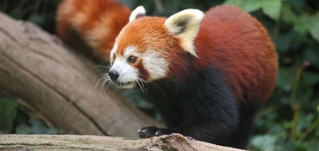 Svjetski dan divljih vrsta u Zoo Zagreb