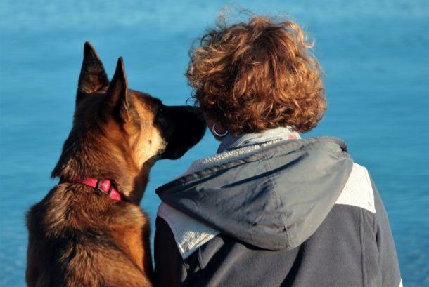 Mirte Jambrović kako psi komuniciraju